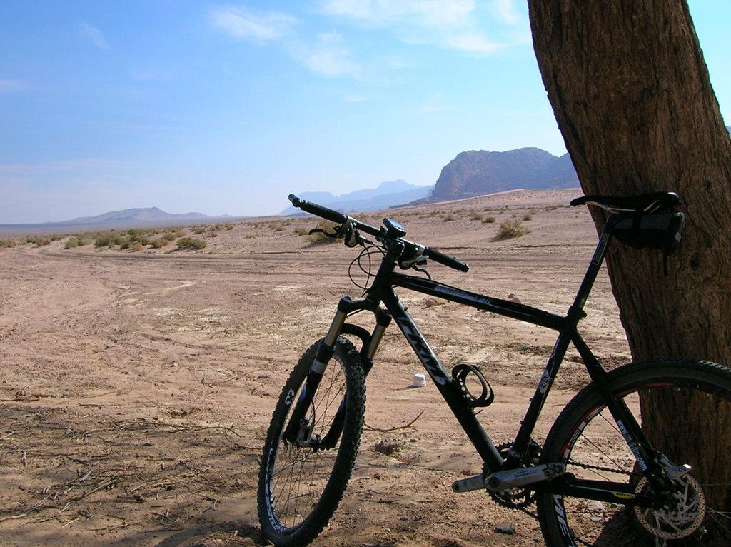 Wadi Rum árbol