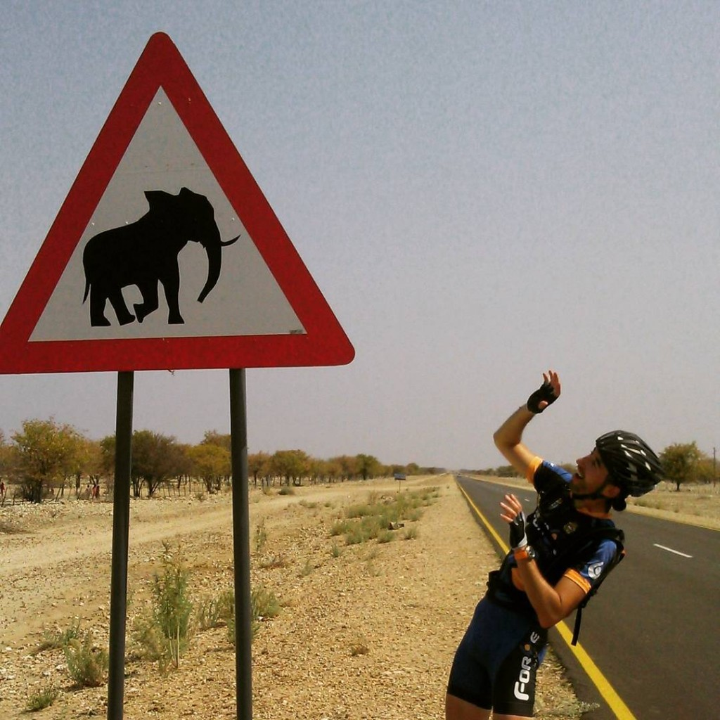 ¡Peligro, elefantes!