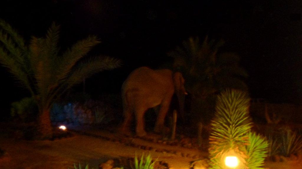 Otro elefante de visita
